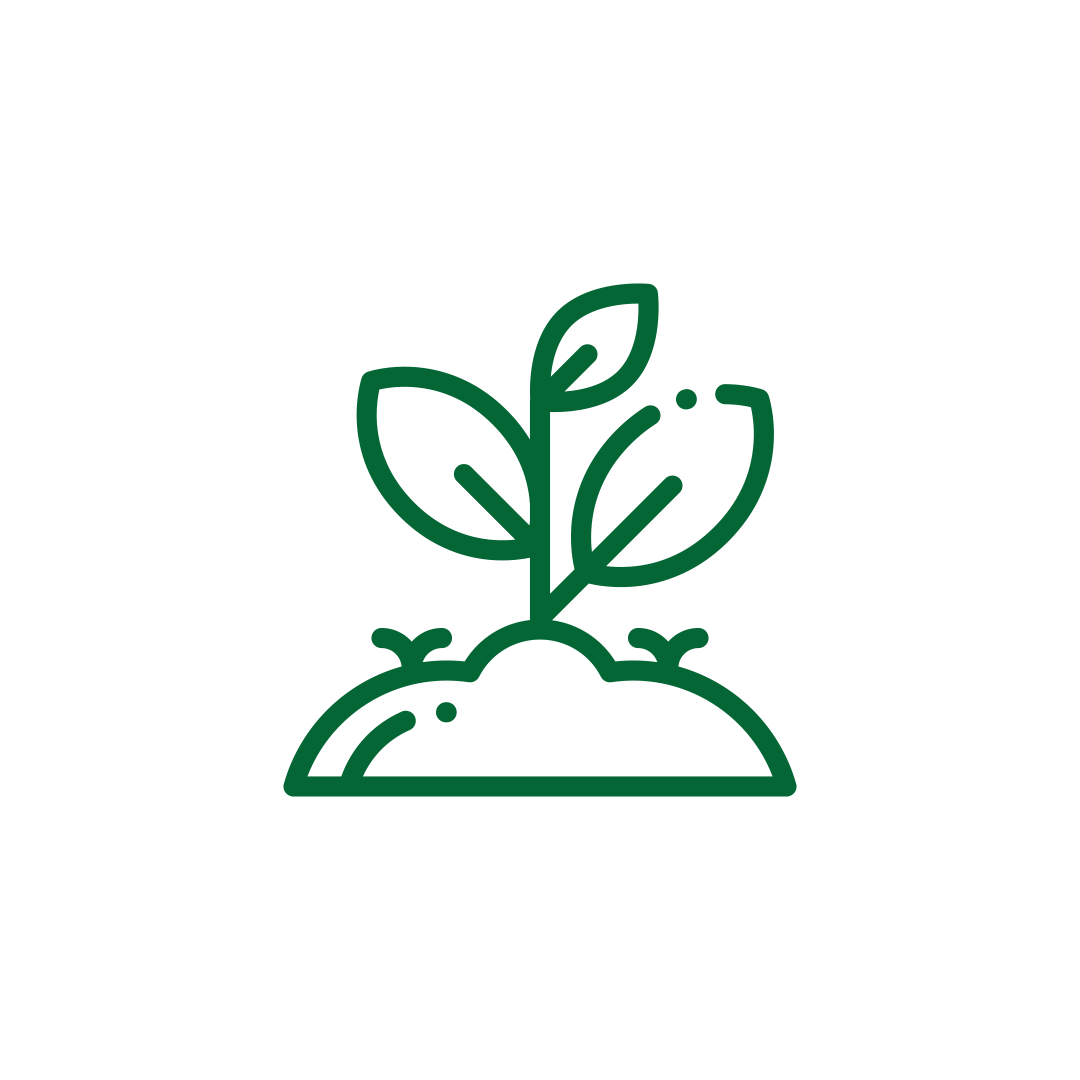 plante proiect gradina