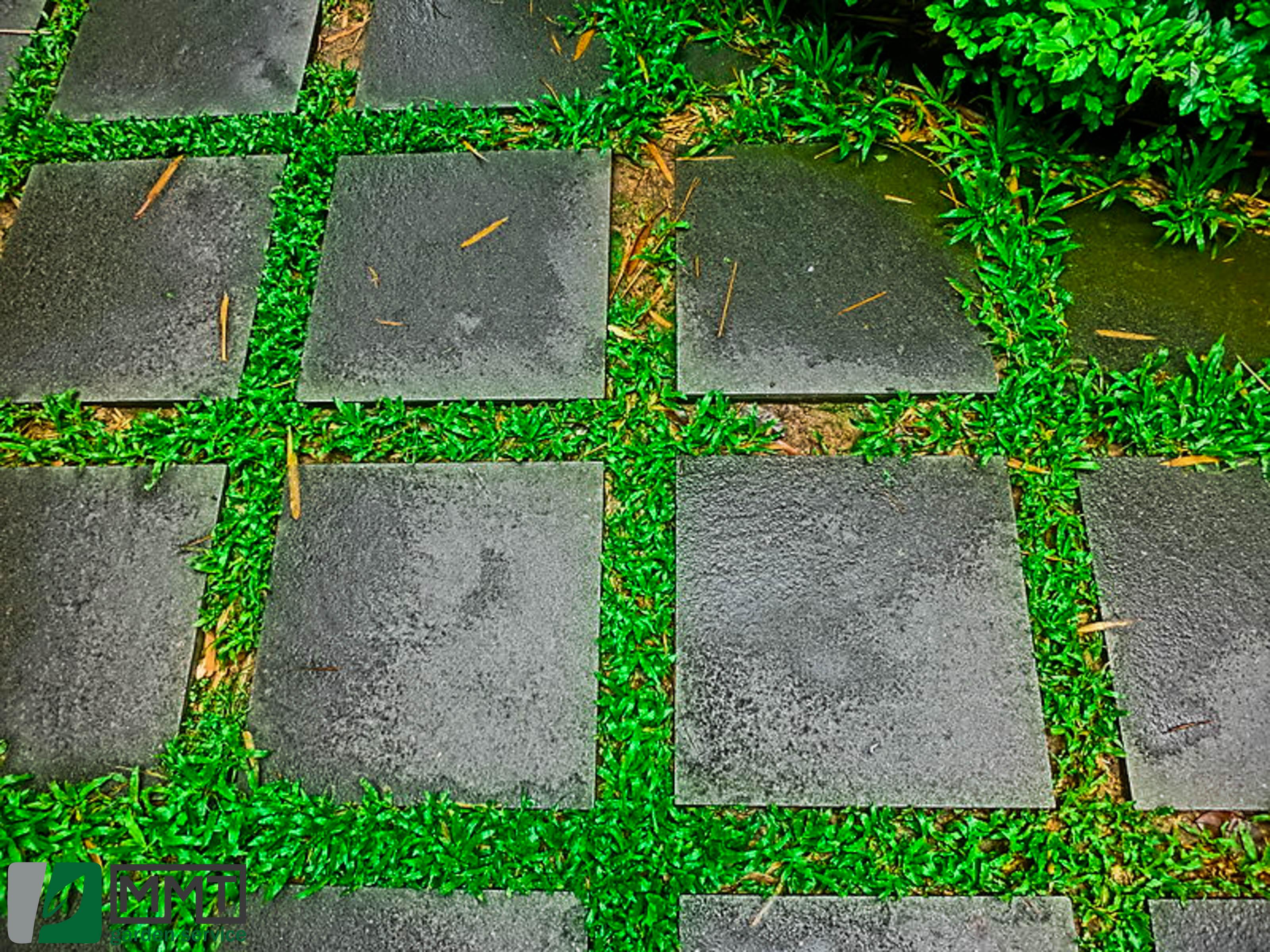 pavaje_garden_service.jpg